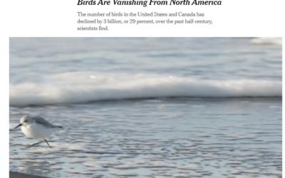 Birds Are Vanishing From North America