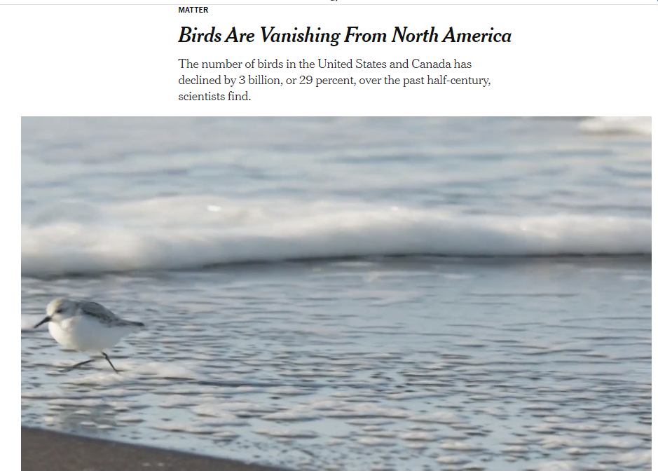 Birds Are Vanishing From North America