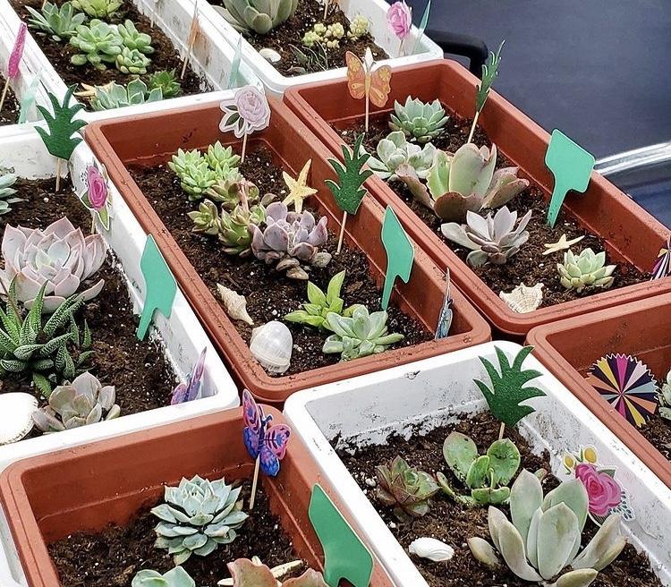 "Mira Mesa High School ""Adopt A Succulent"" Program Helps Educate"